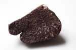truffle exposed